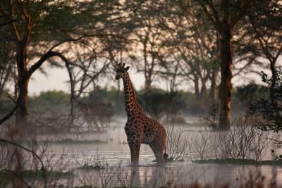 Love Home Swap African villa includes wildlife like giraffes